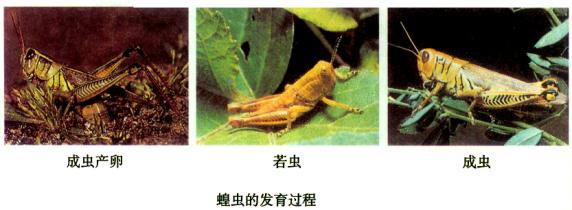 学过昆虫的生殖和发育后,你知道苍蝇,蚊子的发育方式分别是( )a.