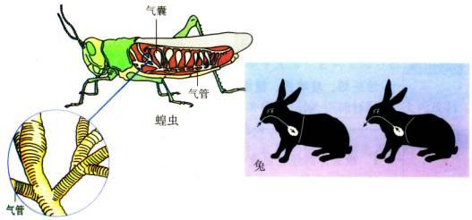 (四)环节动物,哺乳动物的主要特征