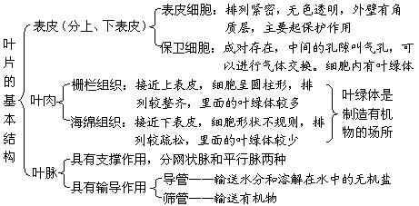 植物体的结构层次思维导图