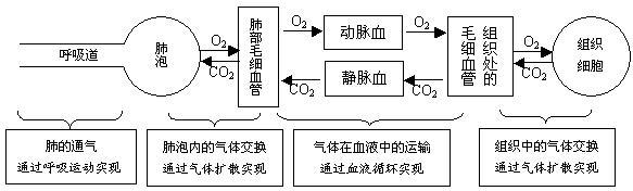 电路 电路图 电子 设计 素材 原理图 583_176