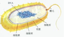 殖生器结构图_男性殖生器结构图,弹弓枪释弹器结构 ...
