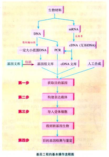 (三)基因工程的基本操作程序