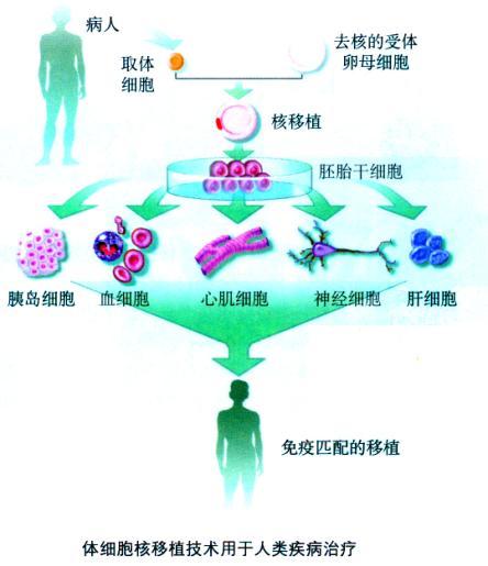 (2)转基因克隆动物可以作为生物反应器