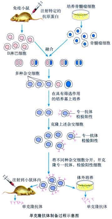 动物细胞培养步骤