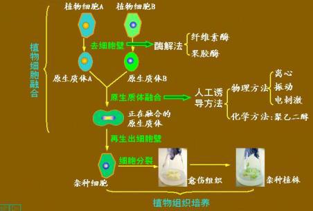 植物细胞工程;