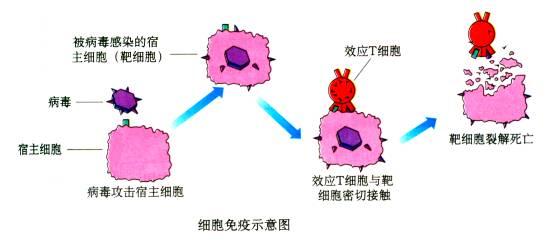 细胞的基本结构归纳