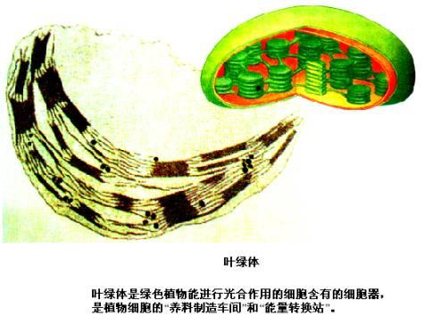 细胞既是生物体结构的基本单位