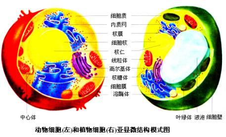 细胞的基本结构